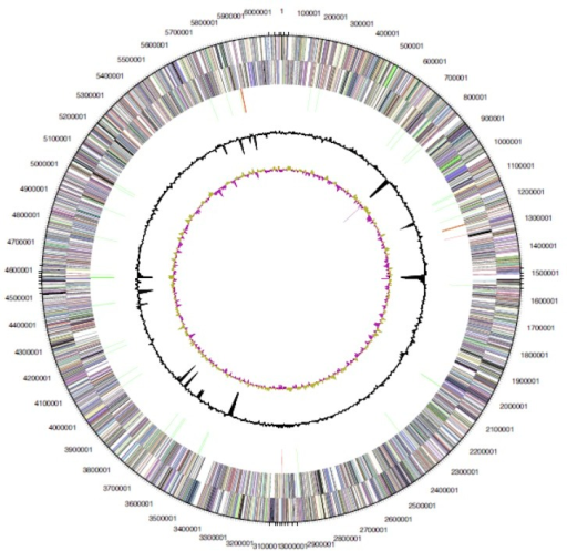Graphical circular map of the chromosome of Arthrospira platensis C1. From outside to the center: Genes on forward strand (color by COG categories), Genes on reverse strand (color by COG categories), RNA genes (tRNAs green, rRNAs red, other RNAs black), GC content, GC skew.
