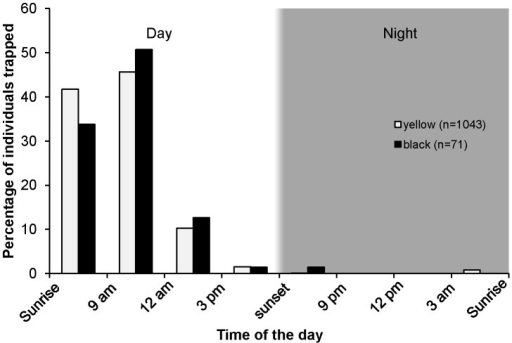 The daily pattern of Ficus septica pollinator activity around trees bearing receptive figs.Number of yellow and black pollinators trapped at different times of the day, expressed as percentage of the total number of individuals trapped over 24