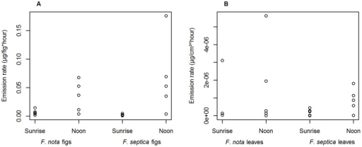 Daily variation of scent emission rates in Ficus septica and Ficus nota.Total scent emission rates from (A) figs (µg/fig*hour) and (B) leaves (µg/cm2*hour) of both species at sunrise and at noon.