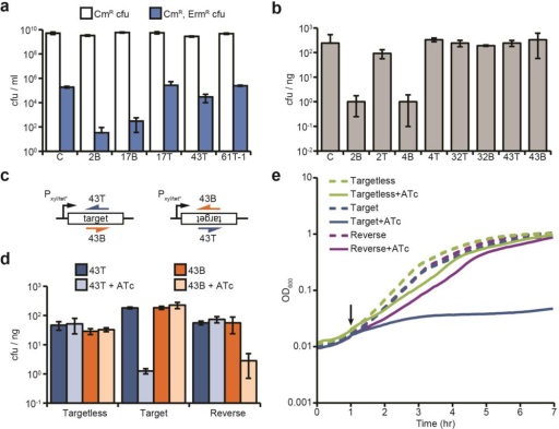 Conditional tolerance is achieved via transcription-dependent CRISPR-Cas targetinga, ΦNM1-ErmR lysogenization for additional spacers. C, pGG3 non-targeting control. b, Transformation of ΦNM1-lysogenic competent cells with CRISPR-Cas plasmids containing different spacers (transformation efficiency is measured as cfu/ng of plasmid DNA). C, pGG3 non-targeting control. c, Integration of the 43T/B ΦNM1 target region into the chromosome of S. aureus. Target sequences (inserted in both forward and reverse orientations) are under the control of the tetracycline-inducible promoter Pxyl/tet*. The 43T/B crRNAs are shown annealing to either the top or bottom strands. d, Transformation of both strains shown in c, as well as an isogenic control strain lacking the target insertion, with CRISPR-Cas plasmids containing spacers 43T or 43B. Transformants were plated on selective plates with or without anhydrotetracycline (ATc) for induction of the Pxyl/tet* promoter. e, Growth curve of strains shown in d expressing the spacer 43T CRISPR-Cas system, in the presence or absence of ATc addition at the indicated timepoint (black arrow). Error bars: mean ± s.d. (n=3).