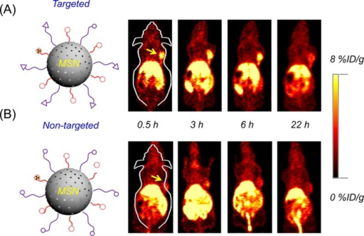 In vivo VEGFR targeted PET imaging in U87MG tumor bearing mice.Coronal PET images of (A) 64Cu-NOTA-MSN-PEG-VEGF121 and (B) 64Cu-NOTA-MSN-PEG injected intravenously in U87MGtumor bearing mice at different time-points. The yellow arrows indicatethe location of the tumor.