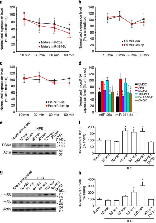 miR-26a and miR-384-5p are regulated at post-transcriptional levels by GluN2A in LTP.LTP was induced in hippocampal slices by stimulating the Schaffer collateral pathway with high-frequency stimulation. The CA1 region was removed at indicated time points after stimulation for miRNA (a,d), pri-miRNA (b), pre-miRNA (c) and protein analyses (e–h). n=8–9 slices (qRT–PCR) or 4–5 slices (immunoblot) for each condition. Data are presented as mean±s.e.m. Kruskal–Wallis and Mann–Whitney U-tests are used for statistical analysis between unstimulated (a–d) or sham-stimulated (e–h) slices and stimulated slices harvested at different post-stimulation time points. *P<0.05, **P<0.01, ***P<0.001. In a–c, black asterisks indicate statistically significant differences for mature, pri- and pre-miR-26a, and orange asterisks indicate those for mature, pri- and pre-miR-384-5p.