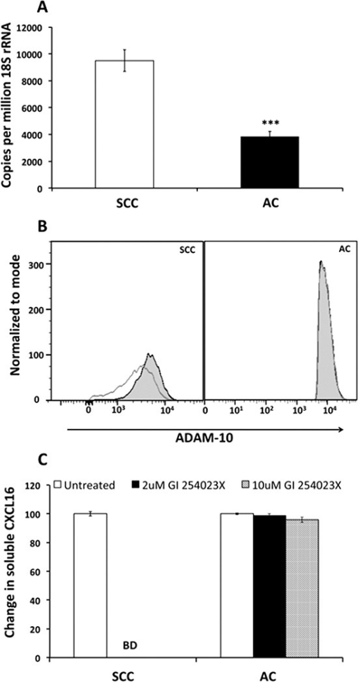 ADAM 10 expression after CXCL16 stimulation and release of CXCL16 after ADAM 10 inhibition in LuCa cells(A) ADAM 10 mRNA levels by semiquantitative RT-PCR. Copies of transcripts are expressed relative to copies of 18S rRNA. Values are mean ± SEM from 3 independent experiments. ***p ≤ 0.001 compared to SCC (NCI-H520). (B) Protein expression of ADAM 10 after CXCL16 stimulation by flow cytometry. Grey empty histograms represent untreated controls and black filled histograms represent CXCL16 treated sample in SCC (NCI-H520) and AC (NCI-H2126). (C) CXCL16 released after inhibition of ADAM 10 with two different concentrations of GI254023X. CXCL16 levels reduced below detection limit of the kit after inhibition of ADAM 10 in SCC (NCI-H520) cells.