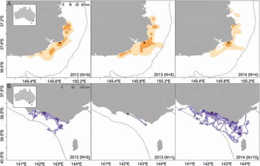 Distribution of short-tailed shearwaters foraging in Bass Strait. Results of a kernel density estimate analysis for short-tailed shearwaters foraging from (a) Gabo Island and (b) Griffith Island breeding colonies in 2012, 2013 and 2014 (data presented for Griffith Island in 2013 are strictly informative). Darker shade colors represent the core foraging area (50 % KUD contour), while lighter shade colors represent the home range (95 % KUD contour). The dashed line indicates the location of the 200 m isobath. Inset map shows the colonies' location in relation to Australia