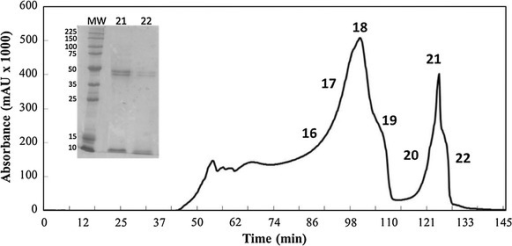 Chromatogram profile of supernatant of strain X-33/pPic-clavMO. 5 mg/mL of protein extract using a Hiload™ 16/60 Superdex™ 75 prep grade column (GE Healthcare) originating 24 fractions eluted in approximately 5 mL and monitored at 280 nm. The silver-stained gel shows the protein recovered from fractions 21 and 22 after purification process. MW molecular weight (kD).