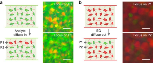 Determination of the direction of solvent diffusion.Microscopic images of colloidal crystals in the surface layer (P1) and inner layer (P2) of (a) a green and (b) a red photonic gel, when they are covered by (a) i-butanol and (b) acetyl acetate, respectively. Scale bars, 50 μm.