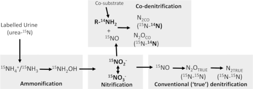 Conceptual model of co-denitrification under urine patches in grassland soils, commencing with urea, the dominant N substrate found in ruminant urine.