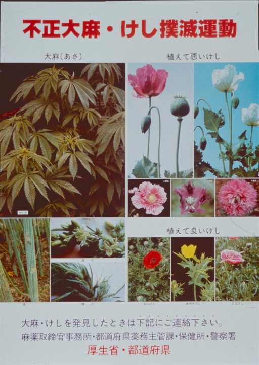 <p>Multicolor poster.  All text in Japanese characters.  Poster dominated by color photo reproductions featuring plants from which illicit drugs are derived.  Marijuana and opium poppies, both flowering and as pods, are most prominant.  Publisher information at bottom of poster, along with additional text.</p>