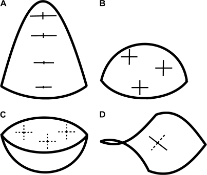 Schematic surfaces representing different shapes exhibited by the flower primordium during its development: cone-like structure in which the tip of a cone is replaced by a rounded cap (A); nearly hemispherical shape (B); cavity-like shape (C); crease (D). Exemplary crosses, plotted on the surfaces, represent the principal directions of curvature. Cross arm lengths are proportional to the curvature in a given direction. The arm is plotted as a solid line if, in this direction, the surface is convex, and as a dashed line if it is concave.