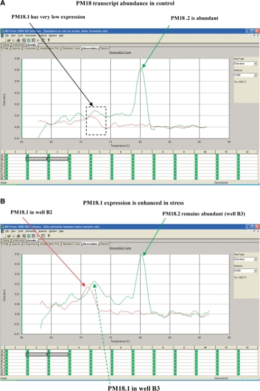 Dissociation curves for PM18 transcript in the control and ABA-treated samples showing primer specificity. Red and green curves represent amplicons generated by two different sets of primers. (A) PM18.2 is abundant in the control condition (green arrow). The small, red and green peaks in the dashed box indicate comparatively low abundance of PM18.1. (B) Both PM18.1 and PM18.2 are expressed in the ABA-treated samples. Curves represent amplicons derived from primer pairs designed to amplify PM18.1 (red arrow) alone in well B2 or both PM18.1 (dotted green arrow) and PM18.2 (solid green arrow) in well B3. The similarity of PM18.1 peaks within (A) or within (B) indicates primer stringency.