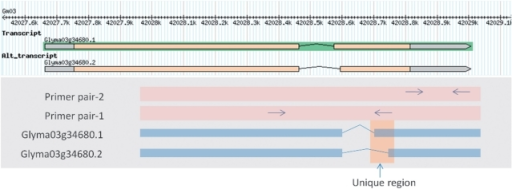 Genomic locations of primers designed to amplify PM18 transcripts using PRIMEGENS-v2.