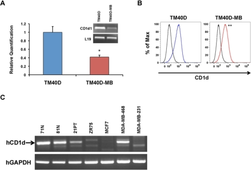 Decreased expression of CD1d in highly metastatic murine and human breast cancer cells.(A) Real-time RT-PCR assay confirming significant downregulation of the CD1d1 gene in TM40D-MB cells, as compared to parental TM40D (low metastatic) cells. L19 serves as an internal control. Experiments were performed in triplicate, and data are represented as the mean ± SEM, * P≤0.05. (B) Flow cytometry analysis of CD1d using a PE-conjugated anti-CD1d mAb (1B1) or isotype IgG2b control. Average ± SD mean fluorescence intensity (MFI) for three independent experiments: TM40D (blue)  = 928.7±21.2, TM40D-MB (red)  = 541.0±57, ** P≤0.001. (C) Decreased expression of CD1d in human mammary epithelial cells correlates with increasing metastatic potential by RT-PCR. 71N, 81N: normal transformed human mammary epithelial cells. 21PT, ZR75: primary breast adenocarcinoma cells. MCF-7: minimally invasive adenocarcinoma cells. MDA-MB-468, MDA-MB-231: highly metastatic human breast adenocarcinoma cells, from patients of African-American (MDA-MB-468) and Caucasian (MDA-MB-231) descent. GAPDH serves as an internal housekeeping gene control.