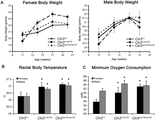 Metabolic abnormalities in Cln3Δex7/8 mice. (A) Graphs depicting female (left) and male (right) mean body weight data from wild-type (diamonds), heterozygous (squares), and homozygous (triangles) Cln3Δex7/8 mice at ages between 11 and 20-weeks are shown (n = 5–10 mice per genotype/sex/age). No significant genotypic differences were observed. Error bars represent SEM. (B) Mean ± SEM rectal body temperatures are shown for male (black bars) and female (gray bars) wild-type (Cln3+/+), heterozygous (Cln3+/Δex7/8) and homozygous (Cln3Δex7/8/Δex7/8) littermate mice are shown. Rectal body temperatures, which were measured at rest, were slightly elevated in male and female, heterozygous and homozygous Cln3Δex7/8 mice, compared to wild-type mice. *, p<0.001 (heterozygous versus wild-type, homozygous versus wild-type). (C) Mean ± SEM values for minimum oxygen consumption (ml/hr) are shown for male (black bars) and female (gray bars) wild-type (Cln3+/+), heterozygous (Cln3+/Δex7/8) and homozygous (Cln3Δex7/8/Δex7/8) littermate mice are shown. Minimum oxygen consumption was elevated in male and female heterozygous and homozygous Cln3Δex7/8 mice, compared to wild-type mice. 5–10 mice per group (genotype/sex) were analyzed. *, p<0.001 (heterozygous versus wild-type, homozygous versus wild-type).