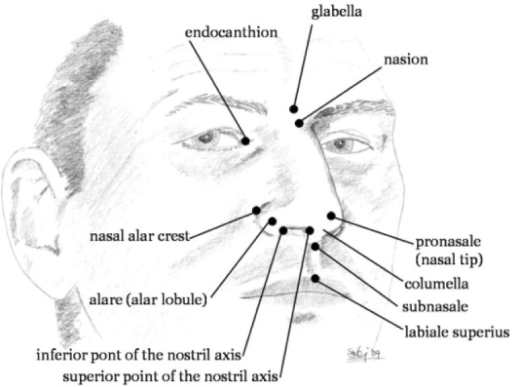 The Key Landmarks Representing The Human Nose Open I