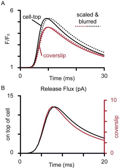 Ca-Fluo-4 and release flux associated with Ca spark.The (A) time profiles of the unblurred calculated Ca-Fluo-4 signals for Ca sparks at the top of the cell (black) and near the coverslip (red). The dashed lines show the corresponding simulated Ca sparks (blurred Ca-Fluo-4 signals) scaled to the amplitudes of the un-blurred signals to allow comparison of the time-courses. (B) shows the release flux required to produce the fitted simulated Ca sparks shown in Fig. 3 and 4A, where a larger current was required when optical blurring was more severe (i.e. if the Ca spark had originated from near the cell top).