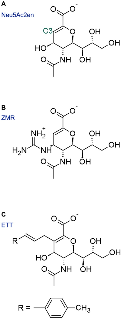 Chemical structures of NA inhibitors and derivatives.Panels A, B and C show the chemical structure of Neu5Ac2en, ZMR and ETT, respectively.