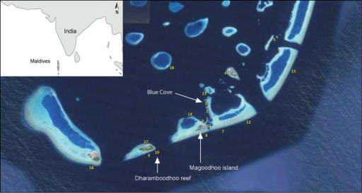 Map of dive sites around Magoodhoo island, Faafu atoll, Republic of the Maldives (Modified from Montano et al. 2014). Stations 3 (inner reef) and 10 (outer reef) contained ingolfiellid amphipods.