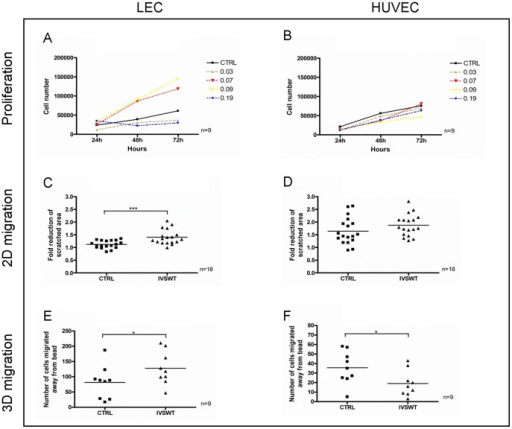 LEC and HUVEC proliferation and migration changes upon IVSWT.(A) LEC proliferation was enhanced by stimulation with 0.07 and 0.09 mJ/mm2, but decreased by 0.03 and 0.19 mJ/mm2. (B) HUVEC proliferation was unaffected by IVSWT. (C) The reduction of a scratched, cell-free area within a time frame of 6 h was significantly enhanced by IVSWT in LECs. (D) No changes of migration upon IVSWT were observed in HUVECs. (E) IVSWT mediated a significant migration of LECs away from Cytodex-3 microcarrier beads embedded in fibrin gels. (F) HUVEC 3D migration was reduced in a 3D migration model. P-values: *** ≤0.01, ** ≤0.1, * ≤0.5.