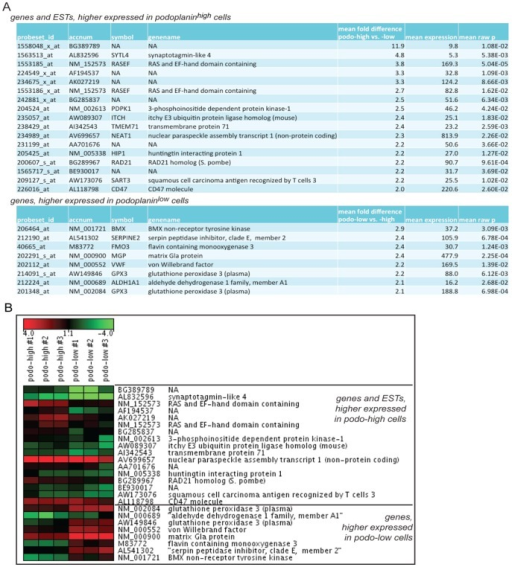 Gene expression profile of sorted subpopulations.(A) Transcripts with more than two-fold stronger expression in one of the respective populations (B) Heatmap visualization of 3 replicates showing log2-transformed gene expression of podoplanin high and podoplanin low LECs. Affymetrix.CEL files were mas5 normalized. Log2-transformed expression values were normalized centred to the median of the 25 plotted transcripts.