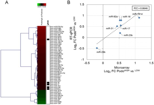 Regulation of miRNA transcription in sorted subpopulations.(A) Heatmap visualization of log2-transformed fold changes between podoplaninhigh and podoplaninlow LECs. The top 50 regulated miRNAs according to log2-fold change were chosen for visualization. Average log2 fold changes from n = 2 biological replicates per sample are shown. (B) Specific miRNAs were selected for confirmation of fold-changes by quantitative PCR (indicated by boxes in the heatmap). Average log2-transformed fold changes between podoplaninhigh and podoplaninlow LECs derived from microarray and RT-qPCR (reference gene  = 5S rRNA) are shown (n = 2 per sample) and linear correlation was estimated using Pearson correlation (PCC  = 0.8646).