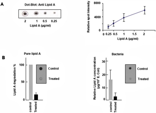 Effect of nitrogen afterglow exposure on lipid A.A. Dot blot binding assay: Increasing concentrations of lipid A were spotted on nitrocellulose membranes and blotted with an anti lipid A antibody. The relative intensity of each spot was quantified (Image J), allowing to build a dose-response calibration curve.B. Dot blots of lipid A pure (left panel) and present in E. coli extracts (right picture): 1 μg pure lipid A was spread off on sterile glass slides, and exposed to vacuum (control), or vacuum + nitrogen afterglow, in the conditions described in the Method section. At the end, the lipid A was eluted, spot on nitrocellulose membrane and immunoblotted with an anti lipid A antibody. The results are expressed as % of residual lipid A vs the vacuum-treated control. On the right panel, determination of the lipid A content in exposed bacteria. 10 μl of a bacterial solution (108/ml), were spotted on glass slides and were treated with plasma. Bacteria extracts were collected, lysed and detected by dot blot for lipid A content. Dot blot results were analyzed with the dot calibration curve and relative quantity of bacteria lipid A estimated. In insert, pictures of lipid A dot-blots pure (left) or from bacteria (right), in vacuum-treated and vacuum + nitrogen afterglow treated conditions. Mean +/-SEM of 5 separate experiments, * < p.0.05.