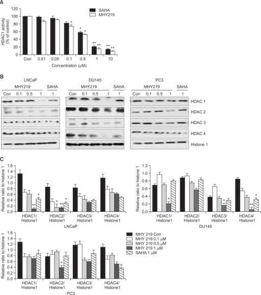 Effect of MHY219 and SAHA on histone deacetylase (HDAC) 1 activity and expression levels of HDACs in prostate cancer cells. (A) Histone deacetylase 1 (HDAC1) enzyme activity was measured by using a fluorometric HDAC activity assay kit. This result represents the percentage of activity compared to control cells in each group, respectively. Results are expressed as mean ± standard error of the mean (S.E.M.) of three independent experiments. *p<0.05, **p<0.01 as determined by Student t-test compared to the control. (B) LNCaP, DU145, and PC3 cells were treated with the indicated concentrations of MHY219 and SAHA for 48 h and HDAC (class I and II) expression levels were measured by western blot analysis. Histone 1 was used as a housekeeping control protein. (C) Densitometric analysis of HDAC1, HDAC2, HDAC3, or HDAC4 ratio, respectively. Bars represent mean ± S.E.M of three independent experiments. *p<0.05, **p<0.01 as determined by Student t-test compared to the control.