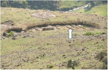 ZEDDA set at the National Park's margin. Arrow points to a row of hives set up on site (Photo: Hussien Adal)