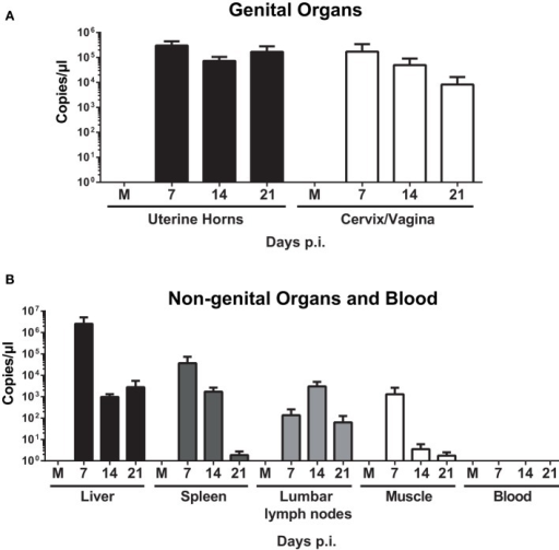 Quantification of W. chondrophila in genital and non-genital organs. Mice were infected with live 109W. chondrophila or mock (M). (A) Bacterial burden in uterine horns and cervix/vagina at days 7, 14, and 21 p.i. (B) Bacterial burden in liver, spleen, lumbar lymph nodes, muscle, and blood at days 7, 14, and 21 p.i. qPCR values represent the mean SEM. Results are representative of two independent experiments with n = 3 and 5 for each experiment.