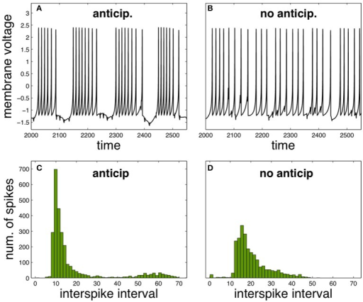 Comparison of neural activity when anticipation and no anticipation exists. (A,B) Phasic and tonic firing of neuron X under anticipation and no anticipation, respectively. (C,D) ISI histograms summarizing these different behaviors. Parameters: n = 3, J0X = 3.25, CX = 0.7. For the anticipation case kMX = 0.7 and kSX = −1 and for the no anticipation case kMX = −1 and kSX = 0.7. T = 5 × 104.