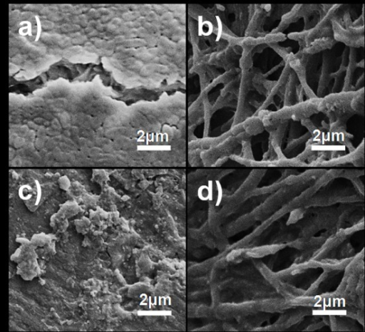 Scanning electron microscopy (SEM) images of nanofibers collected from 48-h-old biofilms.Images (a) and (c) show cell growth of P. aeruginosa PA01 and S. aureus Xen 30, respectively, on the surface of CF. Images (b) and (d) show cell growth of P. aeruginosa PA01 and S. aureus Xen 30, respectively, on the surface of Cu-F.
