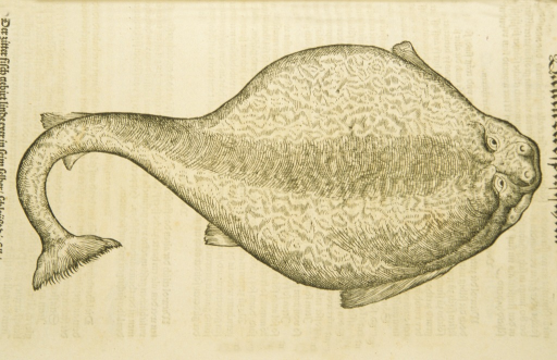 <p>Woodcut illustration of an electric ray.</p>