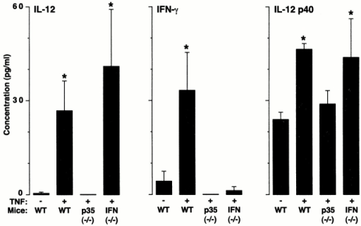 TNF-α induction of IL-12 expression drives downstream production of IFN-γ. Wild-type (WT), IL-12 p35 (−/−), and IFN-γ (−/−) C57BL/6J mice were treated with vehicle alone (PBS) or TNF-α as described in the legend to Fig. 1, followed 12 h later by BAL. The BAL fluid was concentrated 10-fold and used for duplicate measurements of IL-12 and IFN-γ levels by ELISA. Values represent mean ± SEM (n = 4). Levels of IL-12 were undetectable in IL-12 p35 (−/−) mice. A significant increase from PBS-treated wild-type cohort (by ANOVA) is indicated by (*).
