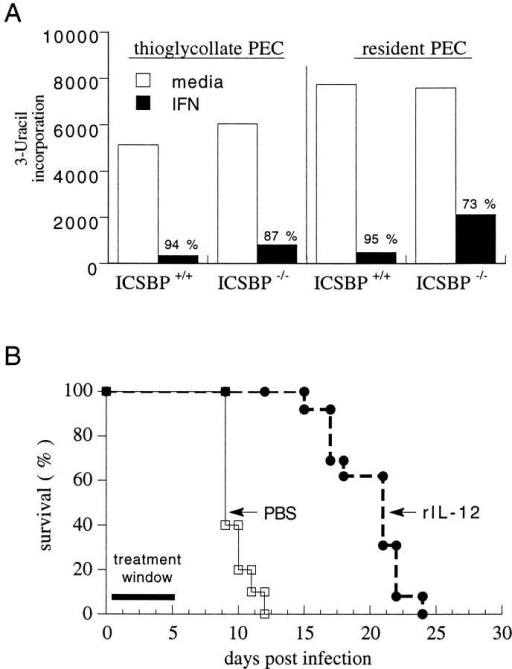 ICSBP−/− mice can be stimulated exogenously to control T.  gondii infection in vitro (A) and in vivo (B). (A) PECs were collected from  naive mice (resident) or from animals injected i.p. with thioglycollate 5 d  prior (thioglycollate elicited). Cells were pretreated with murine IFN-γ  for 2 h. Cultures were infected with 0.2 RH tachyzoites per cell, pulsed  24 h later with [3H]uracil, and cultured overnight. Incorporated radioactivity was determined and expressed as mean CPM for triplicate cultures.  Percentage killing is indicated above the bar for IFN-γ–treated cultures  and was calculated using the formula indicated in Materials and Methods.  Comparable results were observed in two additional experiments. (B)  Survival was compared in ICSBP−/− mice that were treated with PBS (10  mice per group) or rIL-12 (0.5 μg, 13 mice per group) over the first 5 d  of infection. The results shown are pooled from two experiments.