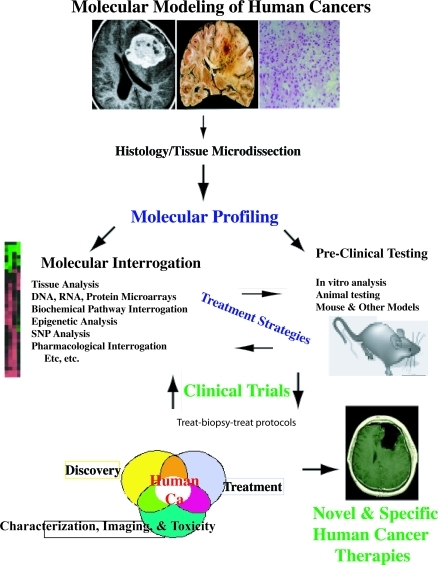 A Schematic Representation of the Potential for Novel Molecular Modeling of Human Cancer TherapyOne potential paradigm is illustrated. Other methods and paradigms are possible.
