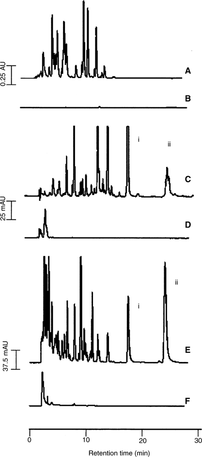 High-performance liquid chromatography chromatograms of extracts of bile (A and B), plasma (C and D) or urine (E and F) from control rats (B, D and F) or rats that had received quercetin either 12.5 (A) or 6.25 mg kg−1 (C) and 2.5 g kg−1 (E) via the i.v. (A and C) or oral (E) routes. Bile was collected prior to (control) and for 20 min after the administration of quercetin; plasma samples were collected 5 min after administration of quercetin; urine samples were pooled over 8 h. Control (untreated) animals received the vehicle only via the appropriate administration route. Symbols i and ii denote retention times of quercetin and isorhamnetin, respectively. AU=absorbance units. For details of sample preparation and chromatographic analysis see Materials and Methods. The chromatograms shown are representative of extracts obtained from three separate animals.