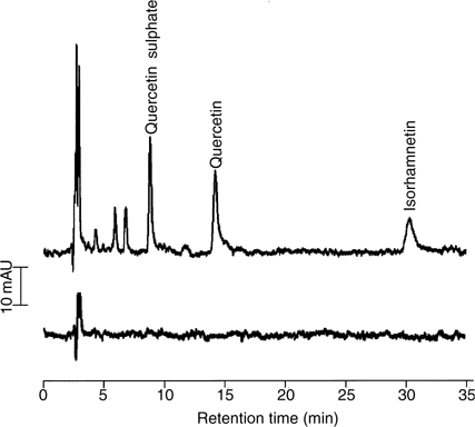 High-performance liquid chromatography chromatograms of extracts of plasma from a patient obtained before (bottom trace) and 5 min after administration (top trace) of quercetin (280 mg m−2 i.v.). Peaks were identified on the basis of cochromatography and selected ion monitoring MS, which afforded m/z 301 for quercetin, m/z 315 for isorhamnetin and m/z 381 for quercetin 3-O-sulphate. AU=absorbance units. For details of sample preparation and chromatographic and mass spectrometric analysis see Materials and Methods.