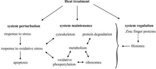 Model of heat stress response in coral embryos. Upon heat treatment, coral embryos respond with regulation of genes playing a role in system perturbation, system maintenance, and system regulation. These functional groups are interconnected.