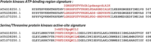 The Protein kinases signature domains present in Osmotin/thaumatin-like protein superfamily