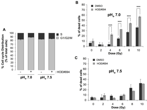 NHE-1 protects cells against irradiation-induced cell death in an acidic environment.(A) Cell cycle distribution of CCL39 cells treated (+) or not (-) with 100 μM of the NHE-1 inhibitor (HOE#694) in normoxia in a /CO2-free environment at pHo 7.5 or 7.0 for 24 h. (B,C) CCL39 cells (1 × 104) were plated in 60 mm dishes. Once attached cells were incubated in a -free medium adjusted to pHo 7.5 or 7.0, and treated in the presence (+) or absence (-) of 100 μM of NHE-1 inhibitor (HOE#694) for 24 h in a CO2-free atmosphere. Dishes were then irradiated (0, 2, 4, 6, 8, and 10 Gy) and returned to a 5% CO2 incubator with fresh -containing medium for 4 days. Cell death was determined by the trypan blue exclusion assay.
