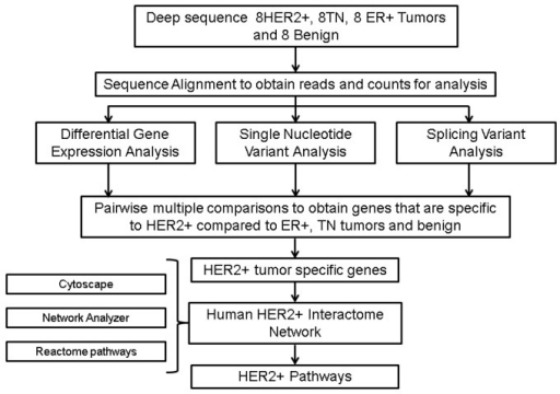 Methods workflow for HER2 transcriptomic network.High level analytical approach to build HER2-positive transcriptomic landscape from paired-end RNA-Seq data analysis of breast tumor subtypes.