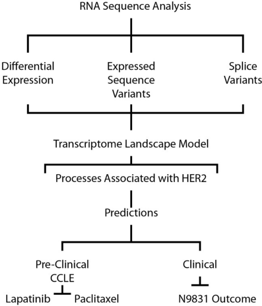 Schematic of analytical approach.Computational approach to identify and characterize genomic features associated with HER2-positive tumors.