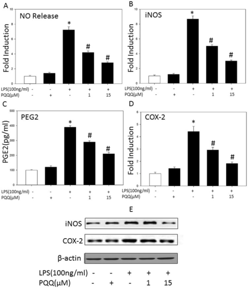 Effects Of PQQ On LPS-induced NO, PGE2 Production And I