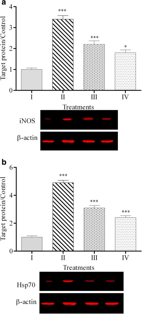 Expression of iNOS (a) and Hsp70 (b) proteins in chicken hepatocytes. (I: Untreated cells, II: Heat-induced cells, III: Heat-induced cells + PKC extract, IV: Heat-induced cells + silymarin). Equal amounts of total cellular protein from different treatments were subjected to Western blot analyses for iNOS, Hsp70 and β-actin proteins. The graph represents the mean ± standard error from three independent experiments, *** p < 0.001, ** p < 0.01 and * p < 0.05 indicate significant difference compared to the untreated cells.