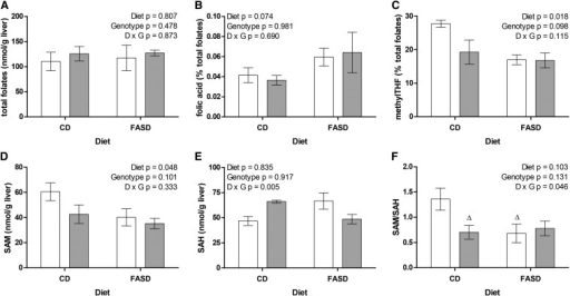 High folic acid consumption reduces methylTHF and methylation capacity. (A) Total liver folate content did not differ between groups. (B) The proportion of unmetabolized folic acid (percentage of total folates) in liver was ∼60% higher in FASD-fed mice (borderline significant, P = 0.074). (C) The proportion of methylTHF was significantly lower in FASD-fed mice. (D) SAM concentrations were significantly lower in FASD-fed mice. (E) There was a significant interaction between the effects of diet and Mthfr genotype on SAH concentrations, but there was no significant difference between groups by Tukey post hoc comparisons. (F) Methylation capacity as measured by SAM/SAH ratio. There was a significant interaction between diet and genotype; CD+/− and FASD+/+ groups were borderline significantly different from CD+/+ by Tukey post hoc analysis (ΔP = 0.062–0.074). White bars: Mthfr+/+; gray bars: Mthfr+/−. n = 4–5 per group, mean ± SEM, analyzed by 2-factor ANOVA. CD, control diet; D, diet; FASD, folic acid–supplemented diet; G, genotype; SAH, S-adenosylhomocysteine; SAM, S-adenosylmethionine.