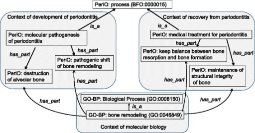 Relationships in Process between PeriO and GO. This figure illustrates relationships between classes of 'medical treatment for periodontitis', 'molecular pathogenesis of periodontitis', and GO-BP. 'Bone remodeling' (GO:0046849) is referred not only by 'pathogenic shift of bone remodeling' and 'destruction of alveolar bone', but also by 'keep balance between bone resorption and bone formation' and 'maintenance of structural integrity of bone'