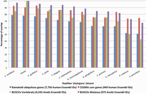 Completeness of the annotated transcriptomes assessed with four reference data sets: Ramskold ubiquitously expressed genes in human (blue bars), CEGMA core human genes (red bars), OrthoDB7 BUSCOs from the vertebrate (green bars), and the metazoan (purple bars) radiation nodes. The species are ordered from higher to lower overlap with the Ramskold data set and Anolis is shown as reference.