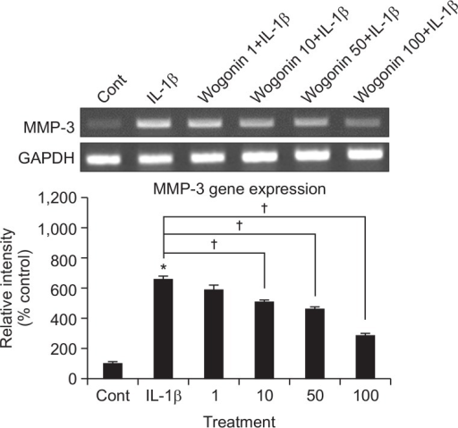 Effect of wogonin on MMP-3 gene expression in rabbit chondrocytes. Primary cultured rabbit articular chondrocytes were pretreated with varying concentrations (1, 10, 50, and 100 μM) of wogonin for 2 h and then stimulated with IL-1β (10 ng/mL) for 24 h. MMP-3 gene expression level was measured by RT-PCR. Three independent experiments were performed and the representative data were shown (cont: control, concentration unit is μM). *Significantly different from control (p<0.05). †Significantly different from IL-1β alone (p<0.05).