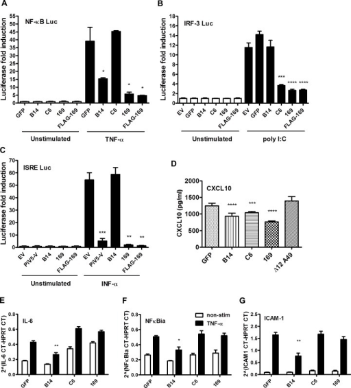 Protein 169 inhibits protein expression after activation of several innate immune signaling pathways.(A) HEK 293T cells were transfected in triplicate with an NF-κB reporter plasmid, TK-renilla luciferase and plasmids for expression of the indicated proteins. After 1 d the cells were stimulated with 75 ng/ml of TNF-α for 7 h or treated with the same medium lacking TNF-α. The luminescence of cell lysates was measured using a luminometer. These data are from one representative experiment (n = 3) and results are presented as the fold increase in luciferase expression. Firefly luciferase was normalized to renilla luciferase (internal control) and further normalized to the unstimulated samples ± SD. Statistical analysis was performed using a two-tailed Student's t-test with Welch's correction where necessary, * p < 0.05, ** p < 0.01, *** p < 0.001, **** p < 0.0001. (B) Performed as in (A) but using an ISG56.1 reporter plasmid (responsive to IRF-3) and cells were transfected with poly I:C or Lipofectamine only. (C) Performed as in (A) but using an ISRE reporter plasmid. The cells were stimulated with 100 U/ml of IFN-α for 7 h. (D) HEK 293T cells were transfected with plasmids for expression of the indicated proteins in triplicate, and the following day the cells were mock-infected or infected with SeV for 24 h. CXCL10 in the supernatant was measured by ELISA. Data shown are from one representative experiment (n = 2) and results are expressed as concentration of CXCL10, estimated from a nonlinear standard curve, ± SD. Statistical comparison to GFP control used a two-tailed Student's t-test with Welch's correction where necessary, *** p < 0.001, **** p < 0.0001. (E, F, G) A549 cells were transfected with plasmids for expression of the indicated proteins in triplicate and, after 24 h cells, were mock-stimulated or stimulated with 50 ng/ml of TNF-α for 7 h. Then mRNAs were extracted, cDNAs were prepared and RT-q-PCR was performed using ViiA 7 Real-Time PCR System (Life Technologies) using primers specific for IL-6 (E), NFκBia (F) and ICAM-1 (G). Data shown are from one representative experiment (n = 2) and results are expressed as cycle threshold (CT) values compared to HPRT levels ± SD. Statistical analysis was performed using a two-tailed Student's t-test with Welch's correction where necessary, * p < 0.05, ** p <0.01.