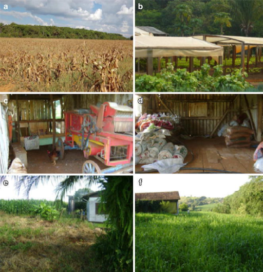 Main risk factors for hantavirus infections in Brazil. a, b Expansion of agricultural activities (corn and vegetables respectively); c, d domestic activities associated with exposure to rodents (livestock and grain storage, respectively); e, f houses near forest remnants where wild rodents occur