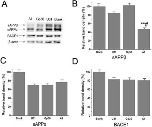 Specific inhibitory effect of aptamer A1 on BACE1 activity in an AD cell model.(A) Western blot analysis of sAPPα, sAPPβ and BACE1 expressions in the A1, Gp30, U31 and blank control groups. (B-D) Quantitative analysis of the sAPPβ (B), sAPPα (C) and BACE1 (D) bands among groups. The data are represented as the mean±SD (n = 3). **P<0.01 compared with the Gp30 and blank groups. #P<0.05 compared with the U31 group.